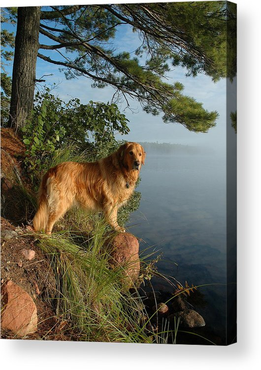 Harriet Lake Acrylic Print featuring the photograph Toby On Point by Sandra Updyke