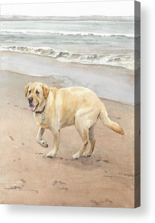 Www.miketheuer.com Yellow Lab On Beach Watercolor Portrait Acrylic Print featuring the drawing Yellow Lab On Beach Watercolor Portrait by Mike Theuer