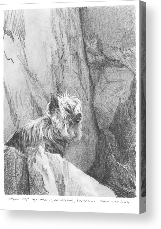 <a Href=http://miketheuer.com Target =_blank>www.miketheuer.com</a> Yorkie Dog On A Cliff Pencil Portrait Acrylic Print featuring the drawing Yorkie Dog On A Cliff Pencil Portrait by Mike Theuer