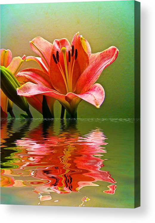 Acrylic Print featuring the photograph Flooded Lily by Bill Barber