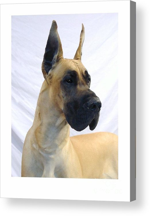 Great Dane Digital Art Acrylic Print featuring the digital art Great Dane 253 by Larry Matthews