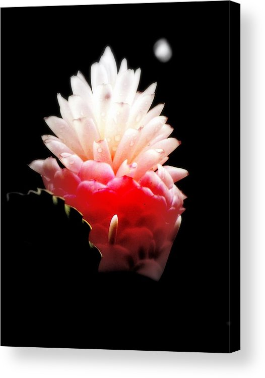 Flowers Acrylic Print featuring the photograph Moonlight Glow by Karen Wiles
