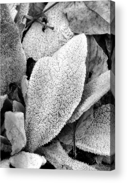 B&w Acrylic Print featuring the photograph Untitled by Kathy Schumann