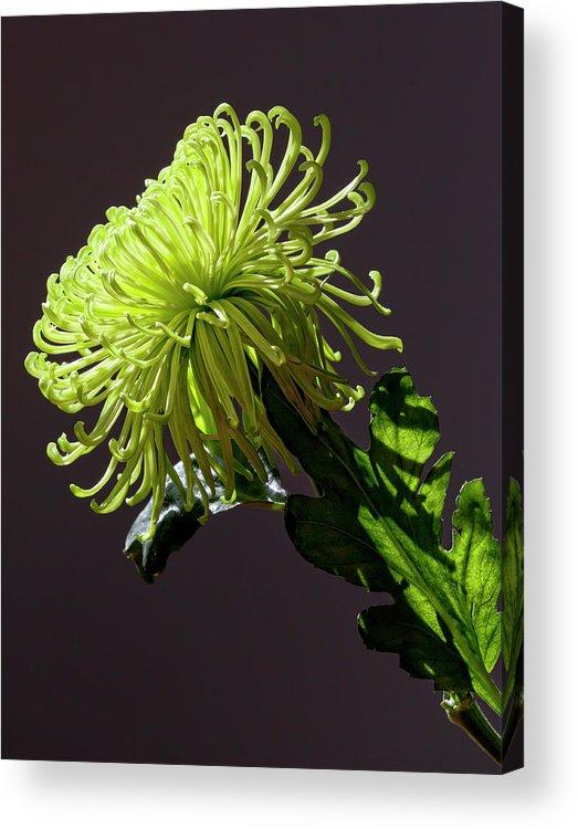 Fine Art Acrylic Print featuring the photograph Floral Still Life by Robert Ullmann