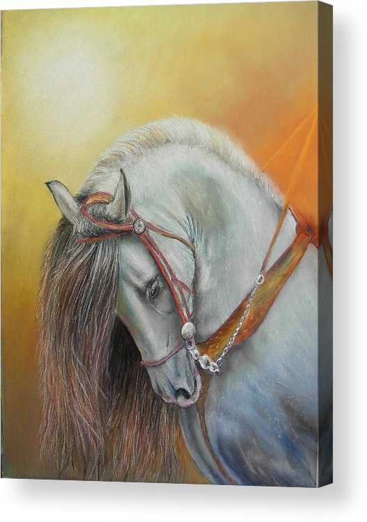 Horse Acrylic Print featuring the painting Andaluz by Ceci Watson
