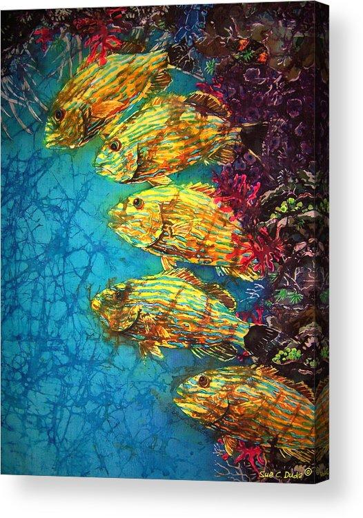 Bluestriped Grunts Acrylic Print featuring the painting Bluestriped Grunts by Sue Duda