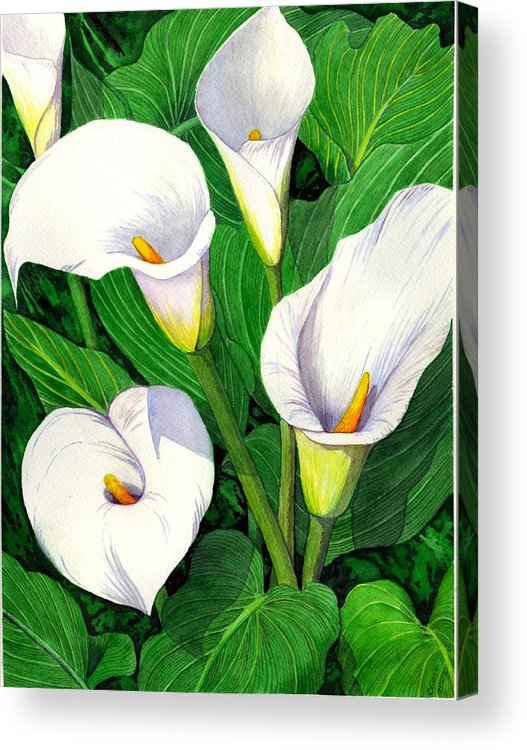 Lily Acrylic Print featuring the painting Calla Lilies by Catherine G McElroy