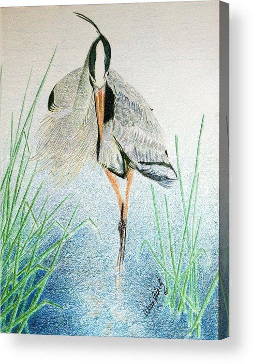 Animals Acrylic Print featuring the painting Great Blue Heron by Wade Clark
