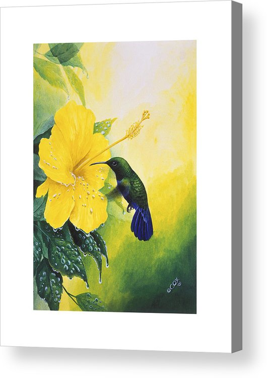 Chris Cox Acrylic Print featuring the painting Green-throated Carib Hummingbird And Yellow Hibiscus by Christopher Cox