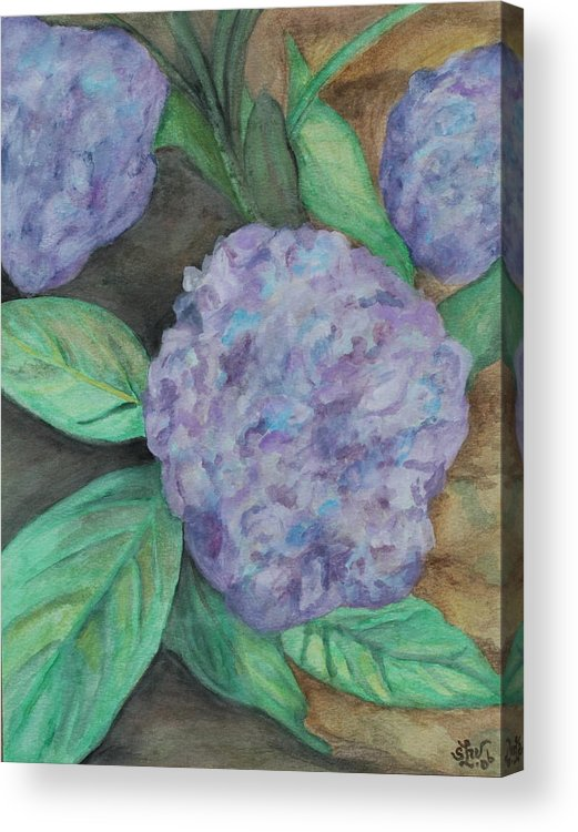 Hydrangea Acrylic Print featuring the painting Hydrangea by Sandra Winiasz