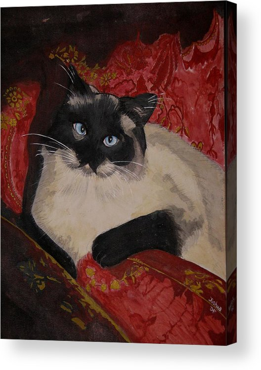 Cat Acrylic Print featuring the painting Kato by Joshua Armstrong