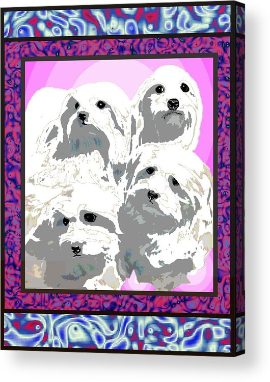 Maltese Group Acrylic Print featuring the digital art Maltese Group by Kathleen Sepulveda