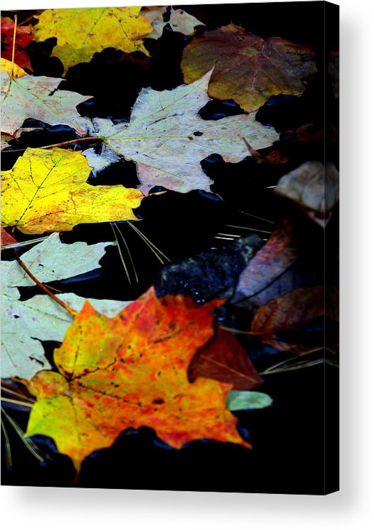 Autumn Acrylic Print featuring the photograph Maple Leaves-0011 by Sean Shaw