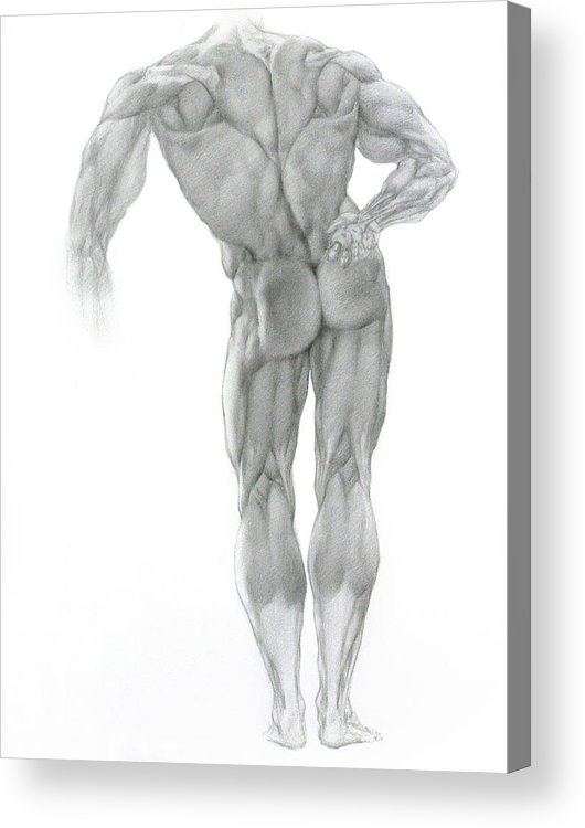 Nude Acrylic Print featuring the drawing Nude 2 by Valeriy Mavlo