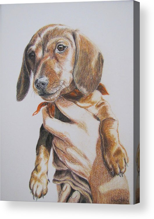 Puppy Acrylic Print featuring the drawing Sambo by Karen Ilari