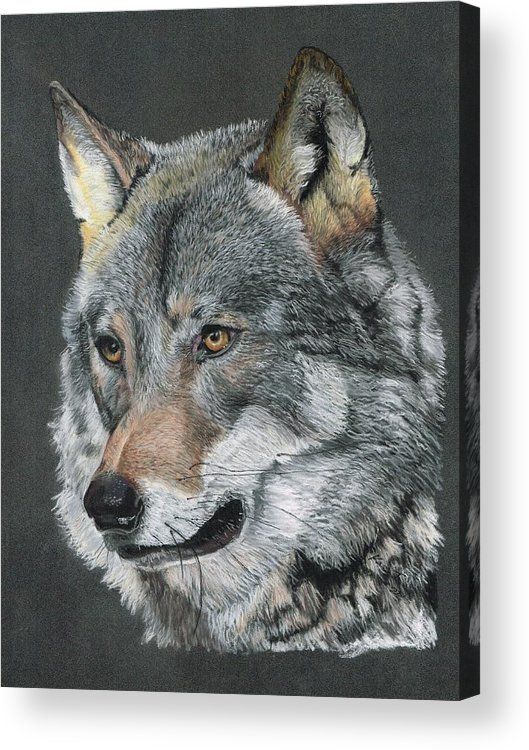 Wolf Portrait Acrylic Print featuring the painting Silver Shadow by Kaz Turner