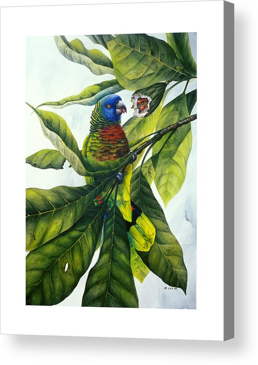 Chris Cox Acrylic Print featuring the painting St. Lucia Parrot And Fruit by Christopher Cox