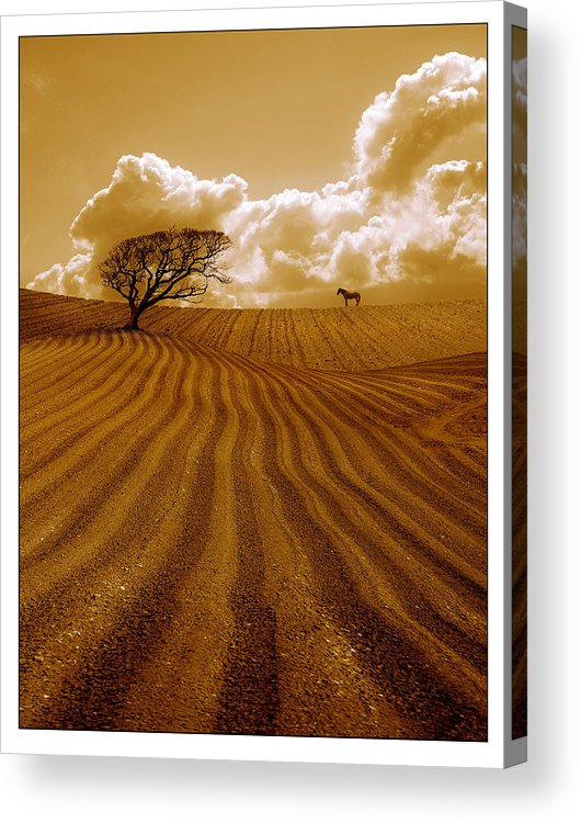 Field Acrylic Print featuring the photograph The Ploughed Field by Mal Bray