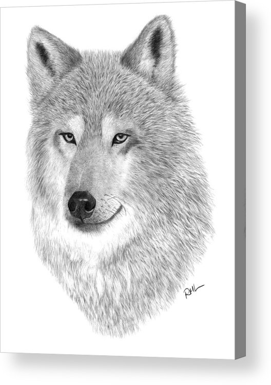 Wolf Drawing Acrylic Print featuring the drawing Timber Wolf by Rosanna Maria