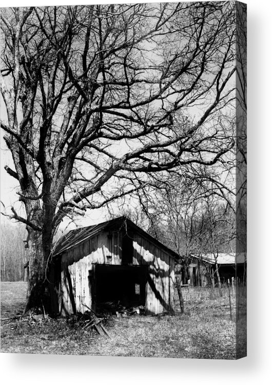 Ansel Adams Acrylic Print featuring the photograph Tree-hut by Curtis J Neeley Jr
