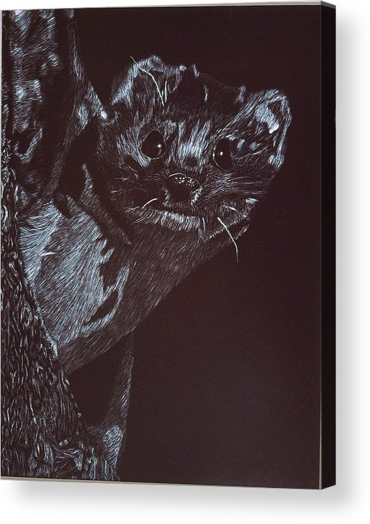 Animal Acrylic Print featuring the drawing Weasel Weasel Weasel by Beth Parrish