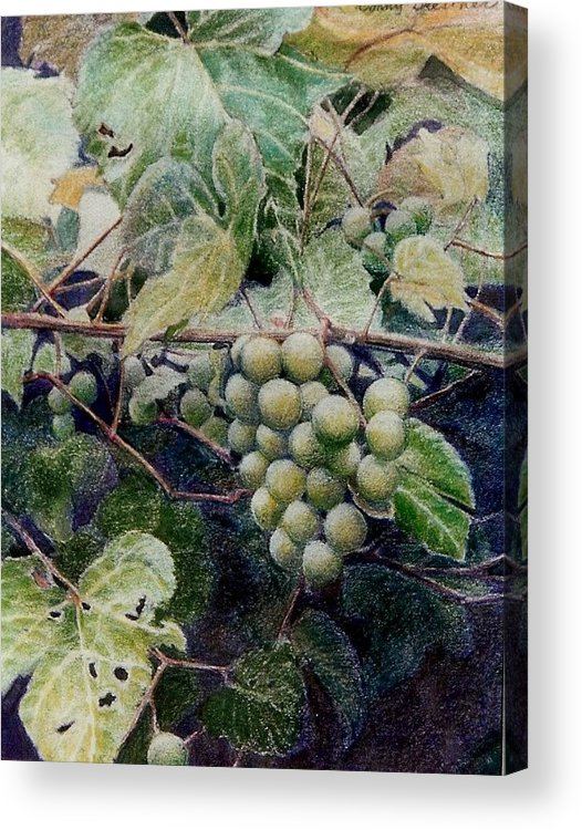 Green Acrylic Print featuring the painting Wild Grapes by Constance Drescher