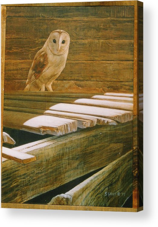 Wildlife Acrylic Print featuring the painting Barn Owl by Steve Greco