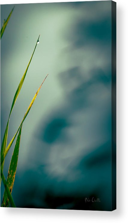 Grass Acrylic Print featuring the photograph Dew Drop by Bob Orsillo