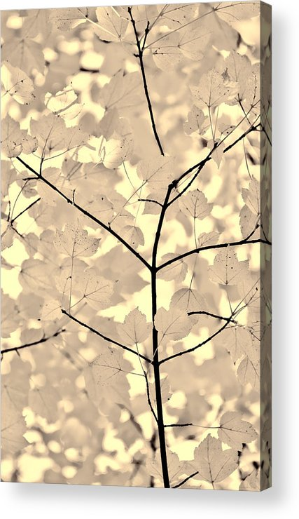 Leaf Acrylic Print featuring the photograph Leaves Fade To Beige Melody by Jennie Marie Schell