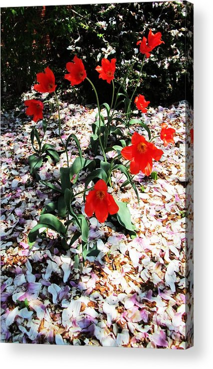 Red Flowers Acrylic Print featuring the photograph Flowers-23 by Todd Sherlock