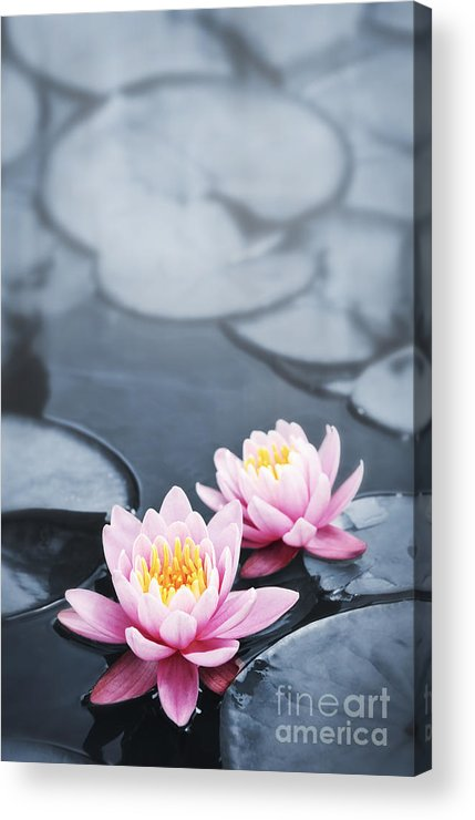 Blossoms Acrylic Print featuring the photograph Lotus Blossoms by Elena Elisseeva