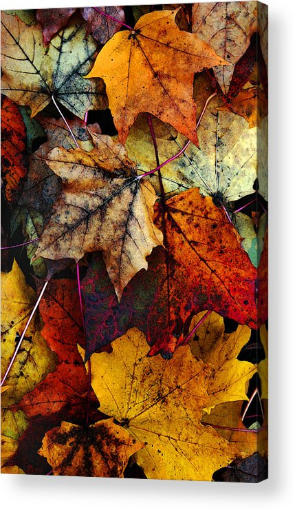 Fall Color Acrylic Print featuring the photograph I Love Fall 2 by Joanne Coyle