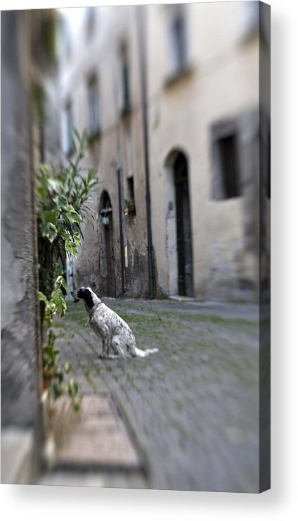 Dog Acrylic Print featuring the photograph Waiting by Marilyn Hunt