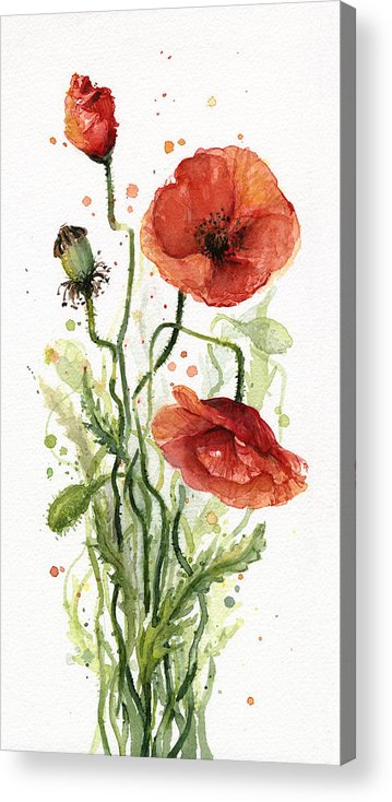 Red Poppy Acrylic Print featuring the painting Red Poppies Watercolor by Olga Shvartsur