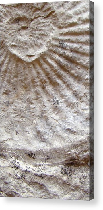 Fossil Acrylic Print featuring the photograph Fossil Three by Ana Villaronga