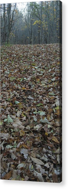 Leaves Acrylic Print featuring the photograph Fall 11 by Jim Lorriman