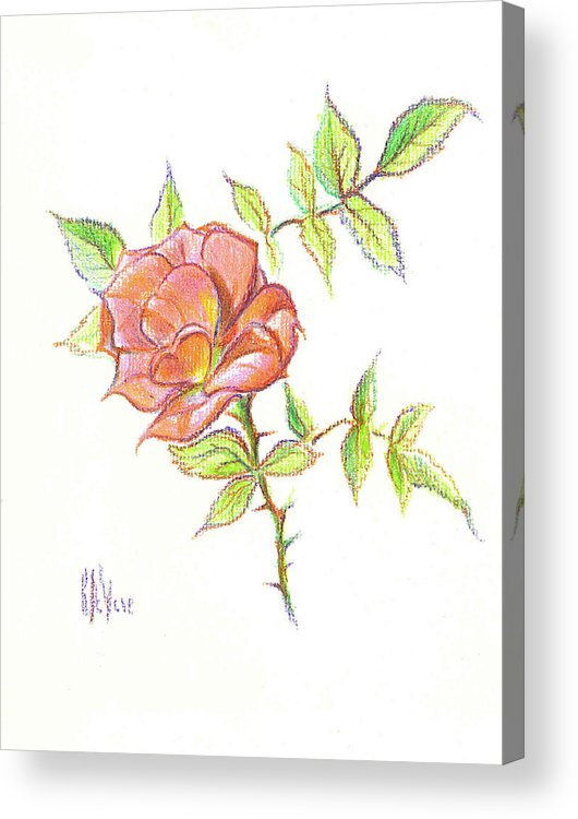 A Rose In Brigadoon Acrylic Print featuring the drawing A Rose In Brigadoon by Kip DeVore