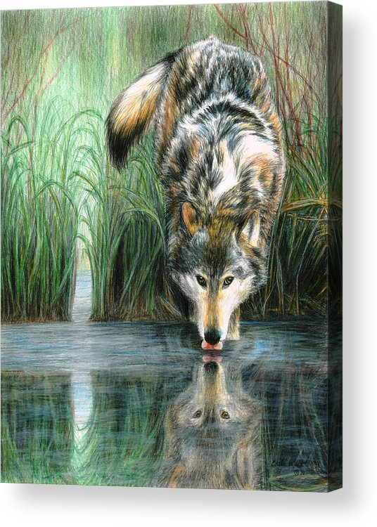 Wolf Acrylic Print featuring the painting Afternoon Reflection by Carla Kurt
