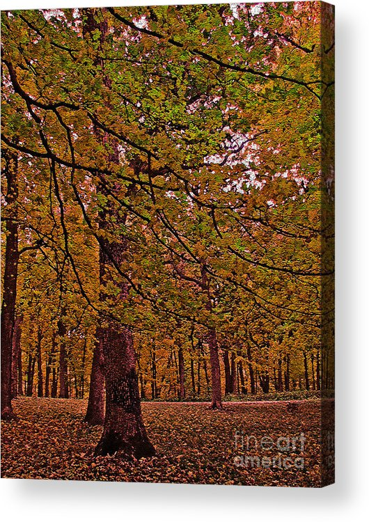 Acrylic Print featuring the photograph Darker Textured Autumn Trees by Minding My Visions by Adri and Ray