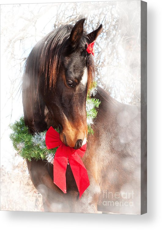 Cute Acrylic Print featuring the photograph Gift Horse by Sari ONeal