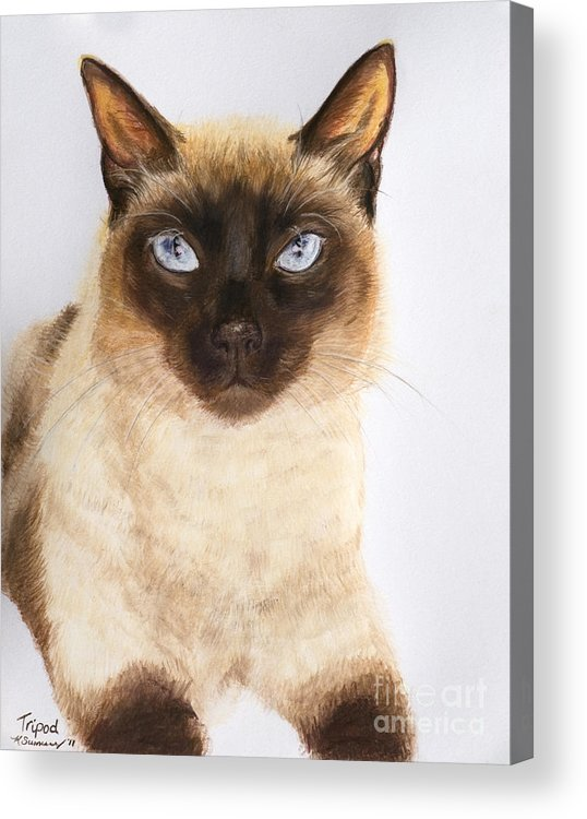 Siamese Acrylic Print featuring the pastel Siamese Cat Over White by Kate Sumners