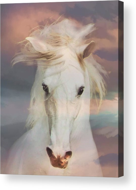 Horses Acrylic Print featuring the photograph Silver Boy by Melinda Hughes-Berland