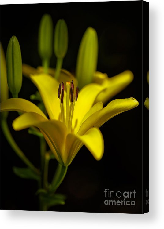 Macro Acrylic Print featuring the photograph Surrounded By Others by Mitch Johanson