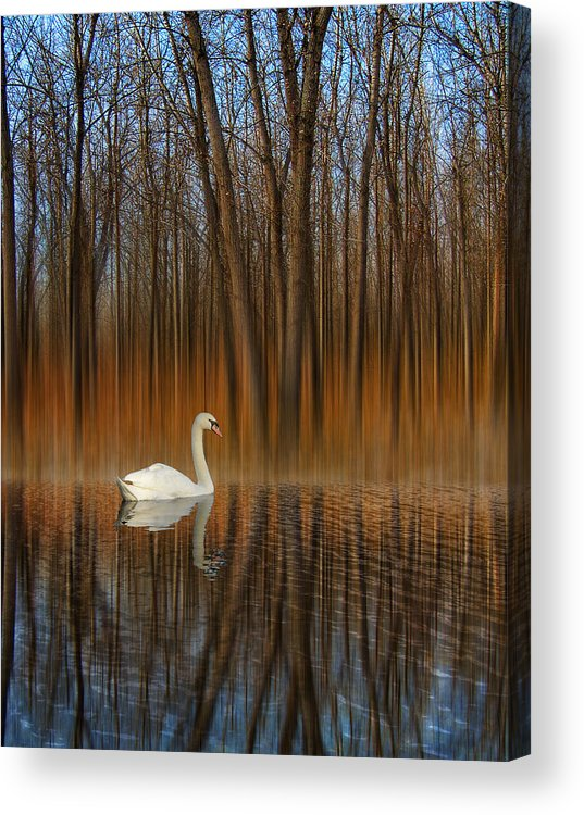 Birds Acrylic Print featuring the photograph 2243 by Peter Holme III