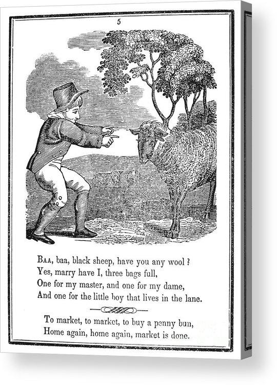 1833 Acrylic Print featuring the photograph Baa, Baa, Black Sheep, 1833 by Granger
