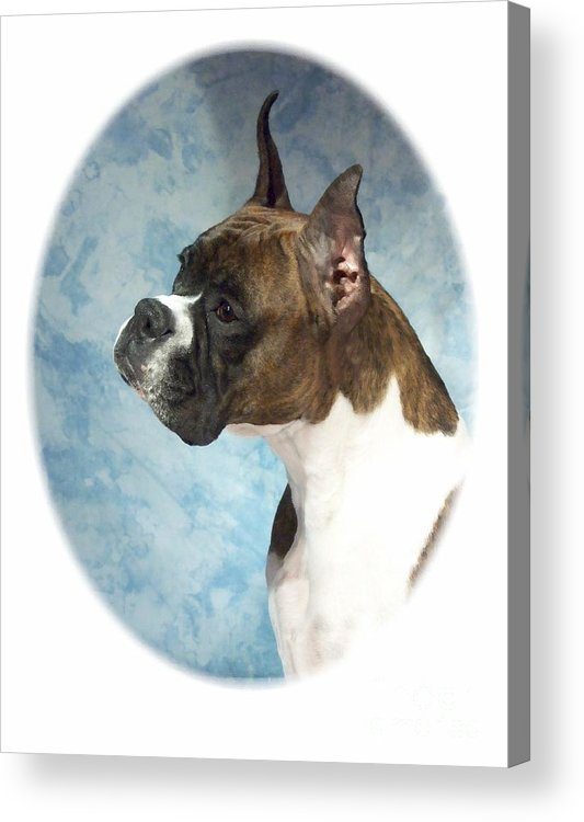 Boxer Digital Art Acrylic Print featuring the digital art Boxer 816 by Larry Matthews