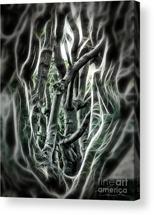 Entangled Acrylic Print featuring the photograph Entangled Worlds by Danuta Bennett