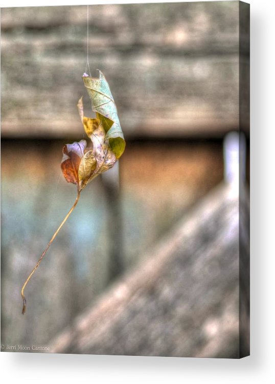 Leaf Acrylic Print featuring the photograph Hangin' By A Thread by Jerri Moon