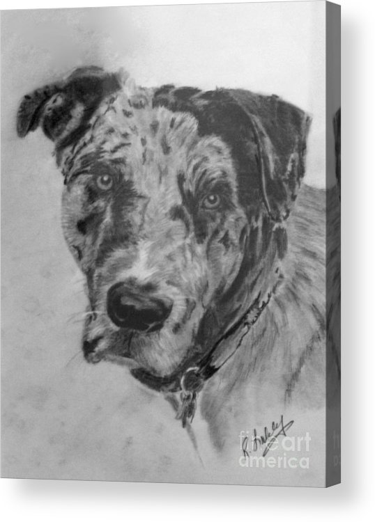 Dog Acrylic Print featuring the drawing Simon by Rob Ladely