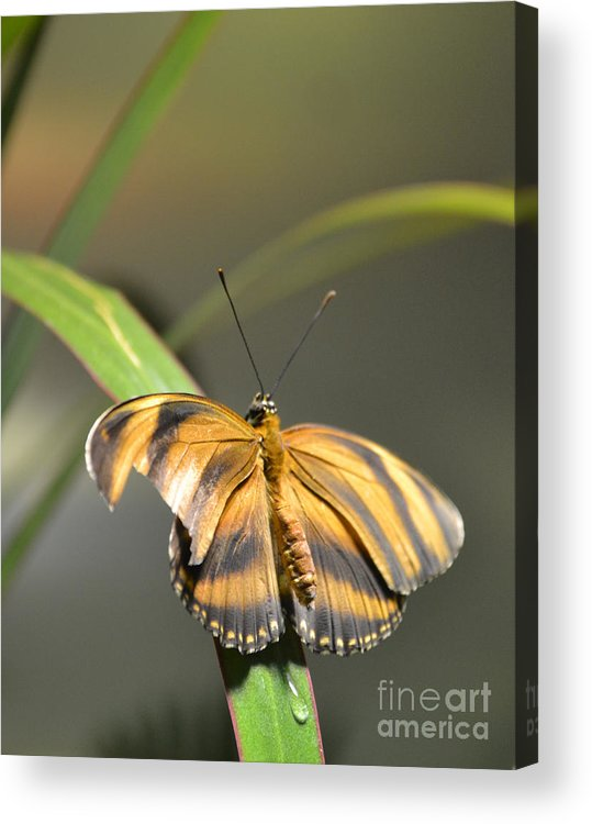 Butterflies Acrylic Print featuring the photograph Tear Drop by Bella Photography